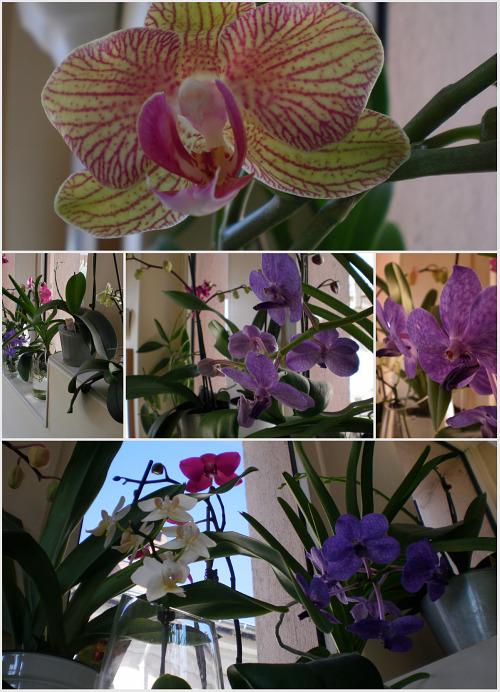 orchidesdedo.jpg